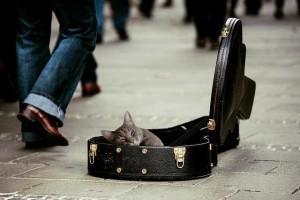 Musica para gatos